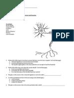 ST Biology Nervous System IEP Test