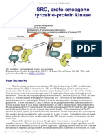 SRC Proto-Oncogene Tyrosine-protein Kinase