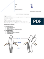 Odontología veterinaria