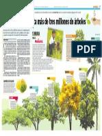 Maracaibo necesita 3 millones de árboles