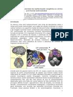 Efeitos Comportais da Malformação do Córtex pré frontal ventromedial