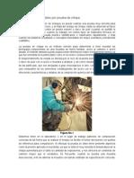 Identificación de metales por prueba de chispa.docx