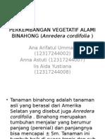Perkembangan Vegetatif Alami Binahong (Anredera Cordifolia )