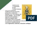 EL ESQUELETO.docx
