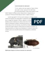 Insecte xilofage