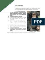 Diferencia entre el mono y el hombre