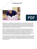 Article   Cachorros De Pomerania (10)