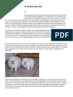 Article   Cachorros De Pomerania (6)
