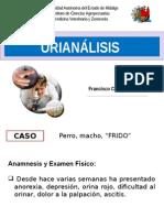 urianálisis veterinaaria .pptx