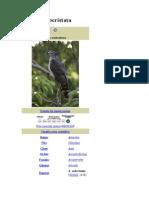 Aves Avicodea Acrinos
