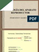 Fisiología de Aparato Reproductor Masculino y Femenino