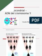 ADN Mitocondrial y ADN Del Cromosoma Y _2013