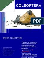 Orden Coleoptera.pptx