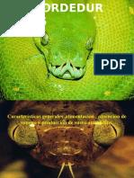 MORDEDURAS - Serpientes.pptx