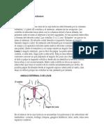 Examen Del Tórax y Pulmones