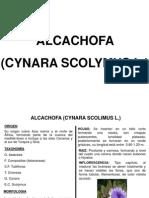 01 Cultivo de Alcachofa