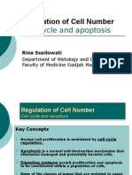 Cell Cycle & Apoptosis