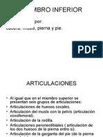 Presentacion Del Tema Pelvis y Extremidad Inferior