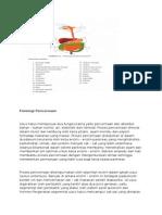 Fisiologi Pencernaan 1