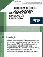 ABORDAGEM TEÓRICO-METODOLÓGICA NA ORGANIZAÇÃO DE IMAGENS EM PATOLOGIA