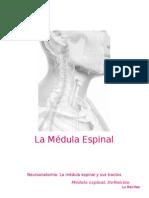 Neuroanatomía. Médula Espinal (1).docx