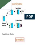 Esquema Fx Biosensor