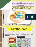 Catabolismo Anaerobico Cuarto b 2015