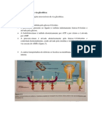 Resumo Bioquímica - Glicólise, Ciclo de Krebs, Gliconeogênese, Glicogênese e Glicogenólise