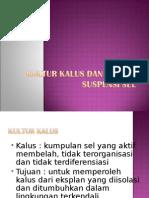 New Kultur Kalus Dan Kultur Suspensi Sel