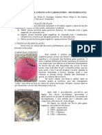 Relatorio Embriologia