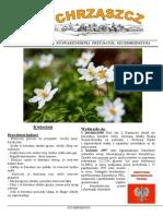 Chrząszcz - Kwiecień 2015 (Nr 109)