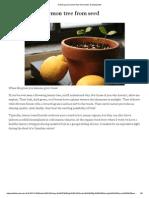 _ ВРТ _ Како Узгојити ЛИМУН ИЗ КОШТИЦЕ How to Grow a Lemon Tree From Seed _ Growing Wild