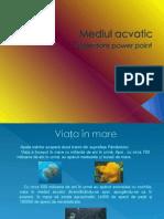 Mediul Acvatic