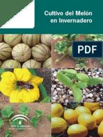 Guia de cultivo de Melon en Invernadero