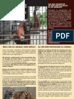 Zoo Acquari e Delfinari la verità
