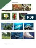 Flora y Fauna de Oceania