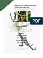 cultivo in vitro de orquídeas