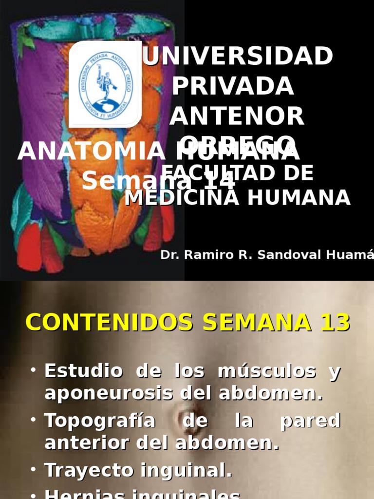 ANATOMIA SEMANA 14.ppt