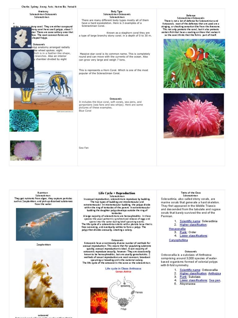 Scleractinia + Octocorallia | Coral | Animal Taxonomy