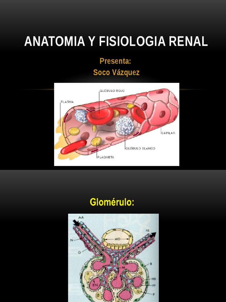ANATOMIA Y FISIOLOGIA RENAL PARA DP - ESTRUCTURA DE FILTRACION.pptx