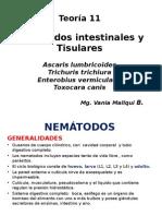 Teoria 11  NEMATODOS 1   2014 (1).ppt