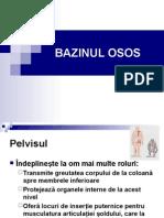 Bazinul Osos, Organe Genitale (1)