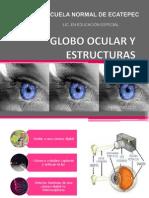 Globo Ocular OFICIAL (Atención Educativa de Alumnos con D.V) 1ER PARCIAL, 2DO SEMESTRE