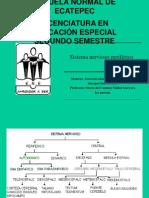 EXPO DEL SISTEMA NERVIOSO (Atención Educativa de Alumnos con Discapacidad Motriz) 1ERPARCIAL, 2DO SEMESTRE