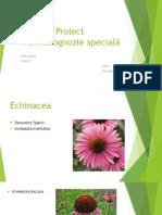 Proiect Farmacognozie specială