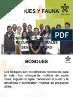Bosques y fauna (sustentacion).ppt