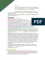 Resumen Biología Fotosíntesis