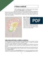 21-Sistema Nervioso Central
