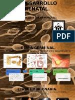 El Desarrollo Prenatal, 1ER PARCIAL, 2DO SEMESTRE (NEUROBIOLOGÍA DEL DESARROLLO).