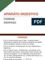 Unidad 1 Digestivo 2 Faringe Esofago (1)